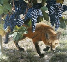 Fox and Grapes transform
