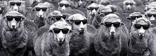 conformity - blnd sheep